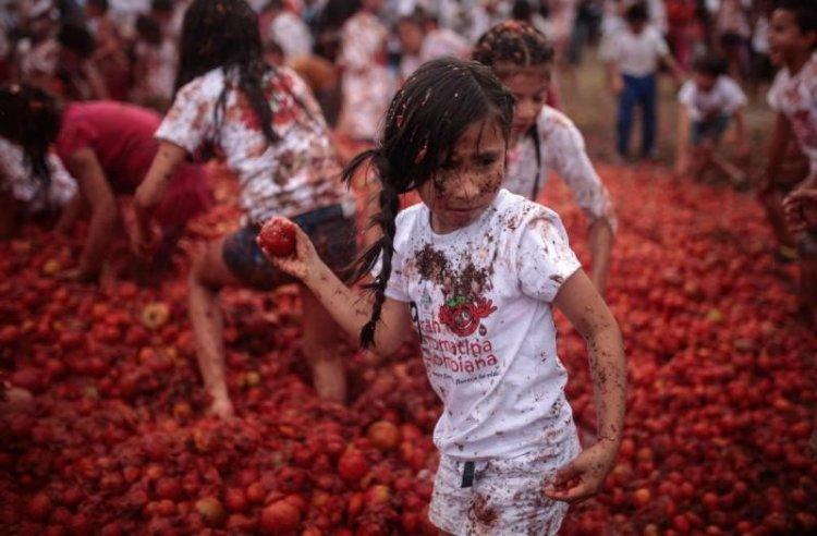 جميع الفئات تشارك فى حرب الطماطم