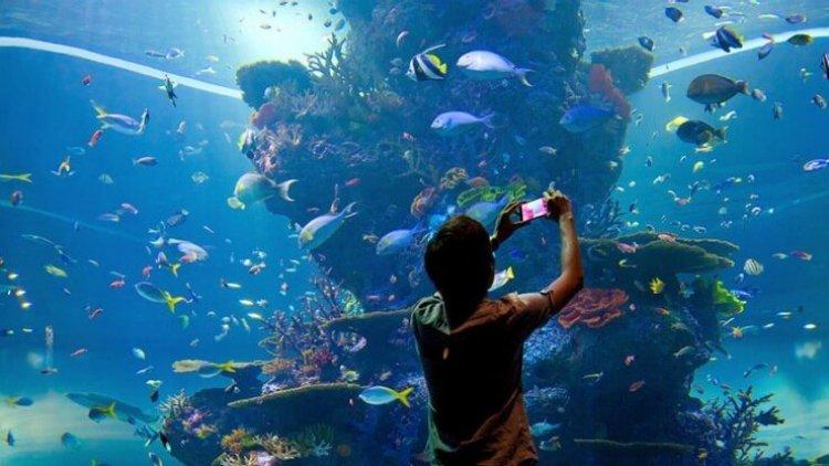 الأطفال يشاهدون الاسماك المختلفة