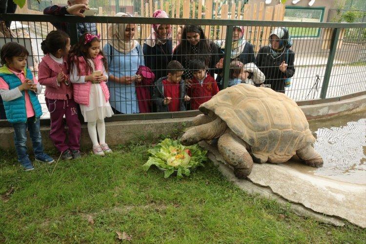 زوار حديقة حيوان داريجا يلعبون من سلحفاء