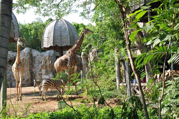 حديقة حيوانات دوسيت