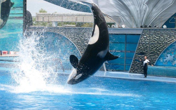 عروض الدلافين الممتعة