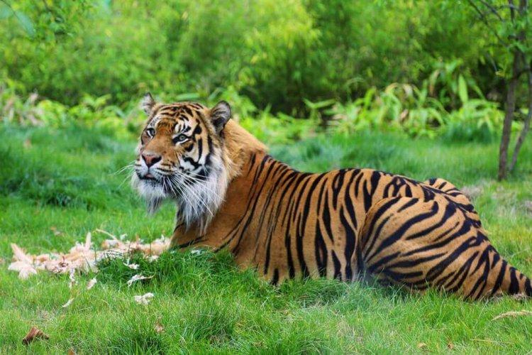 نتيجة بحث الصور عن حديقة الحيوانات اسطنبول للعوائل تركيا