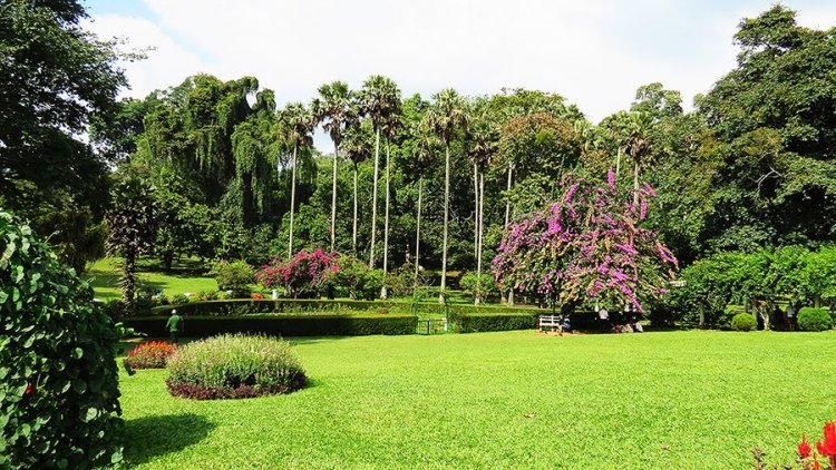 حديقة النباتات الملكية