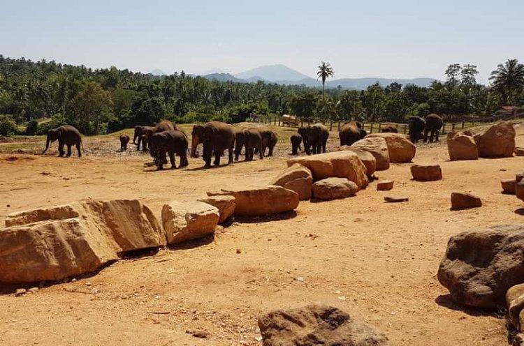 ميتم الفيلة