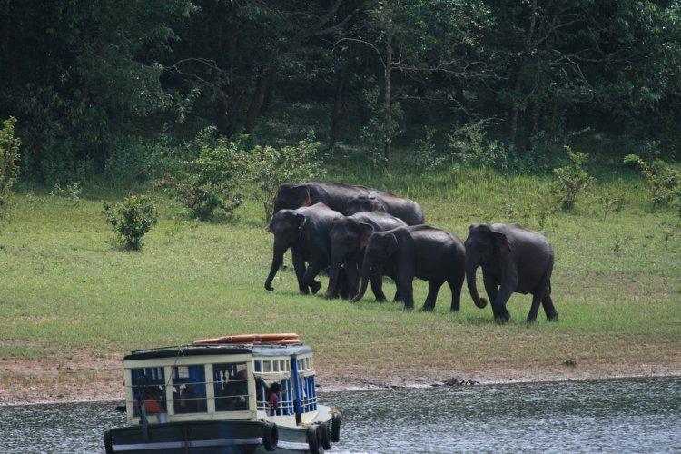 الحيوانات في منطقة تيكادي كيرلا