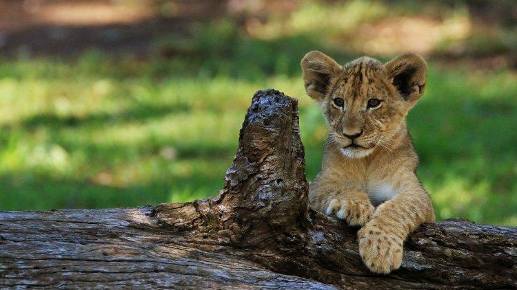 حديقة حيوان تارونجا في سيدني