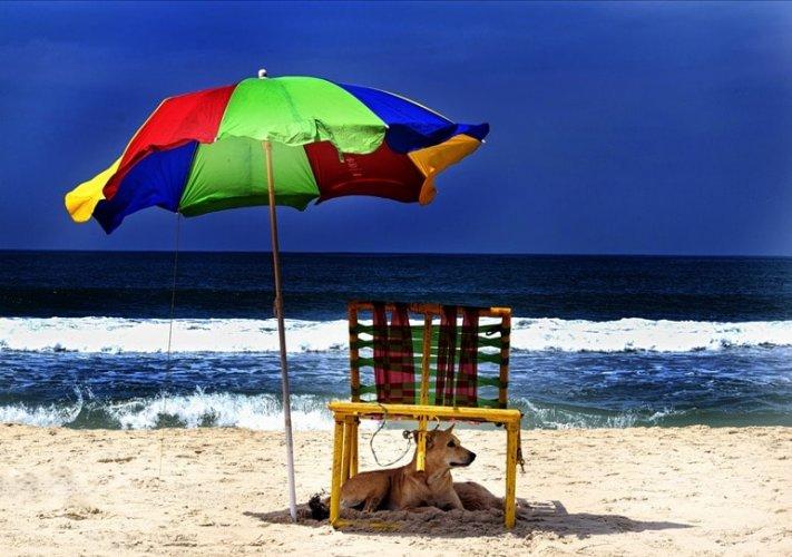 شاطئ فاركالا في كيرلا
