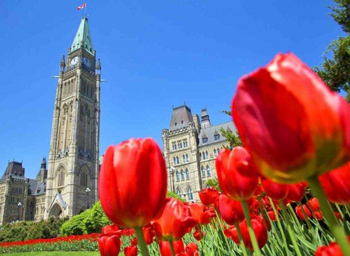 مهرجان التيوليب الكندي