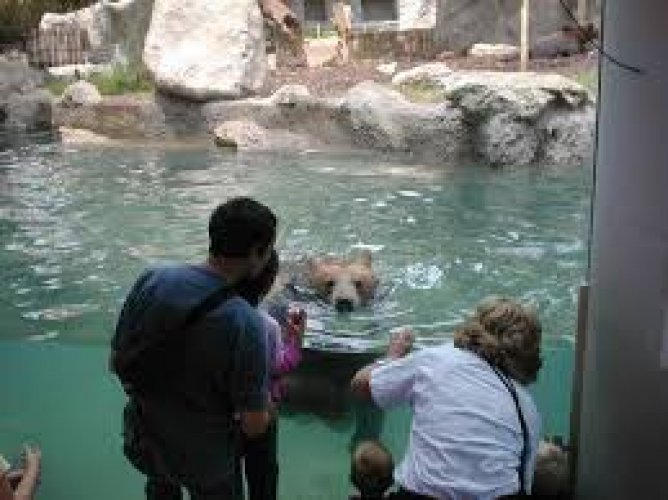 حديقة حيوان روما