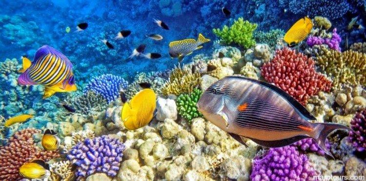 الاسماك الملونة في محمية رأس محمد