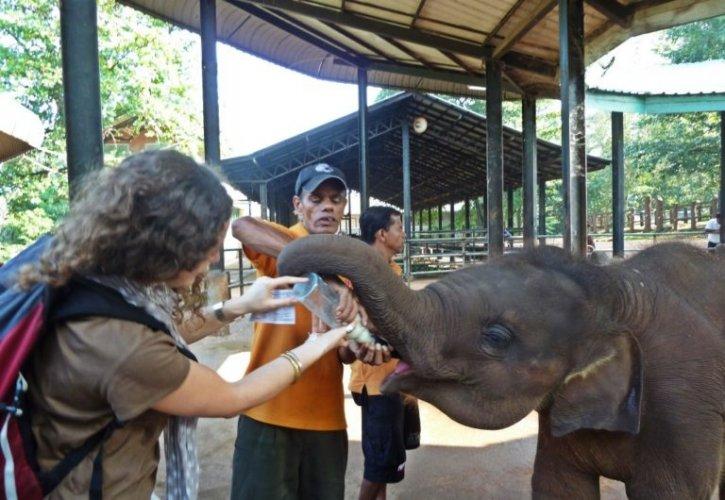 الاطفال في ميتم الفيلة