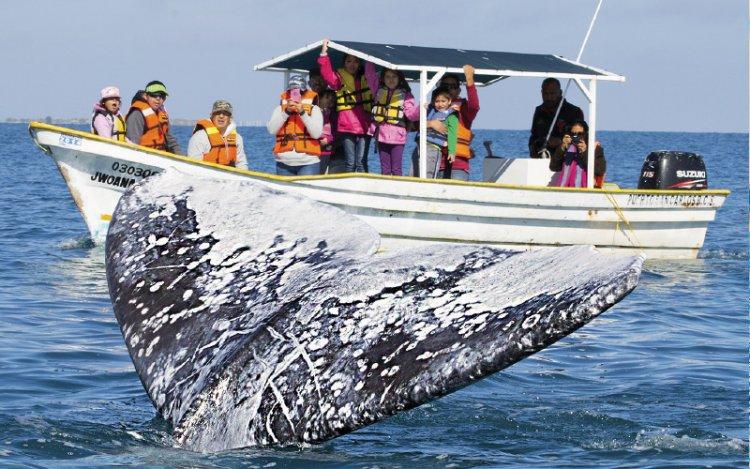 السياح في رحلة القوارب لمشاهدة الحيتان الزرقاء