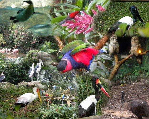 الطيور المختلفة في محمية بانتا