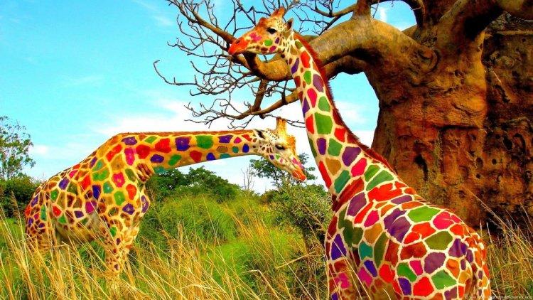 المحميات الطبيعية في تايلاند