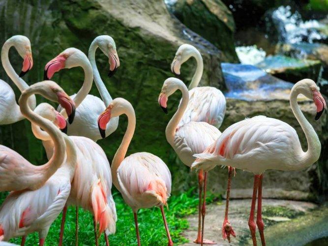 حديقة الحيوانات في كوالالمبور