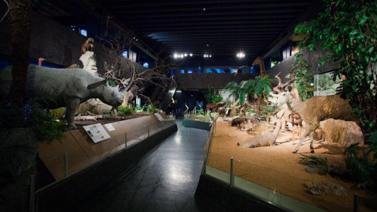 متحف التاريخ الطبيعي في جنيف سويسرا