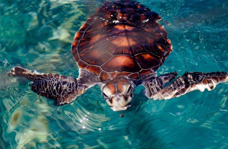 محمية السلاحف البحرية