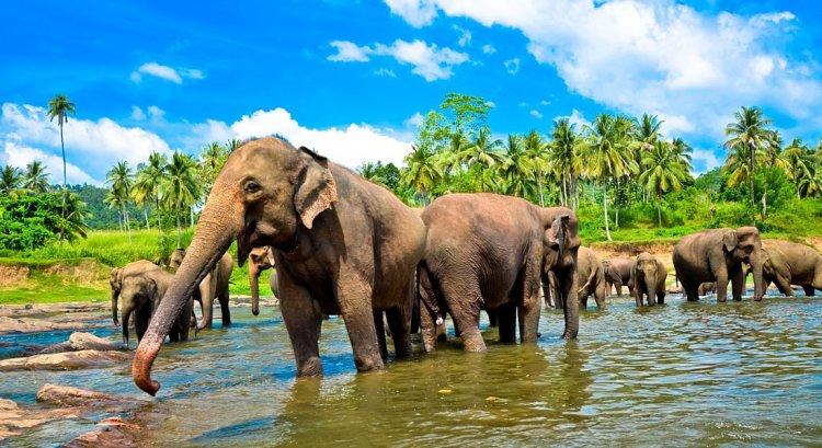 ميتم الفيلة في سريلانكا