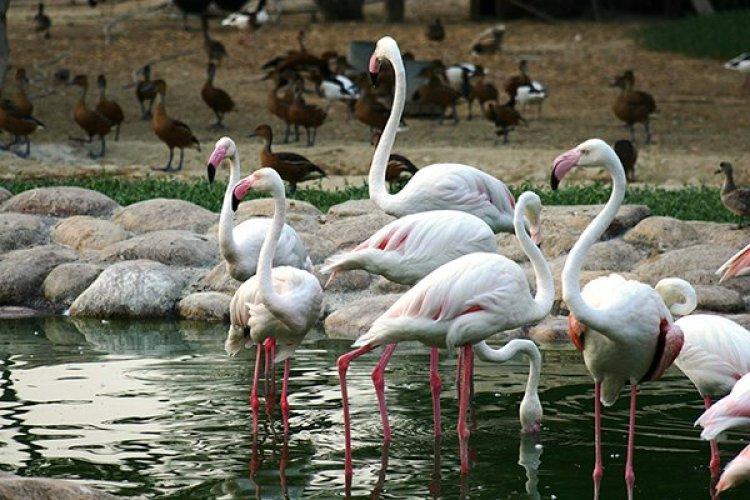 محمية العرين في البحرين
