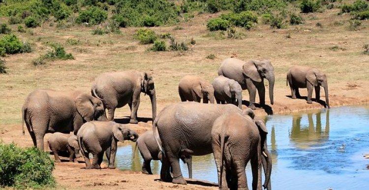 الحياة البرية في جنوب افريقيا