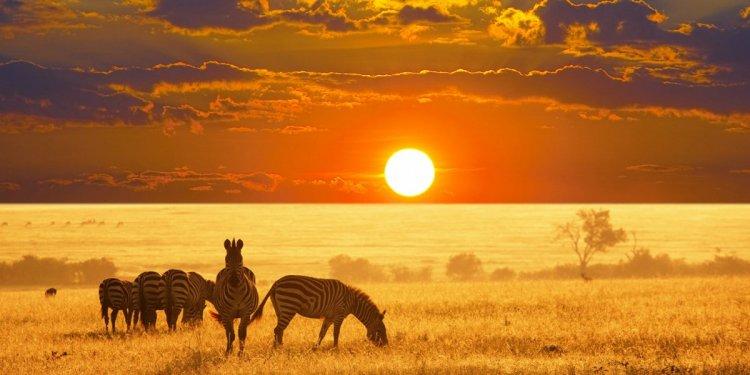 الحياة البرية في ناميبيا