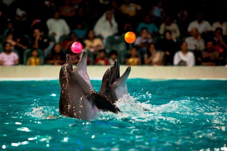 عروض الدلافين في دبي