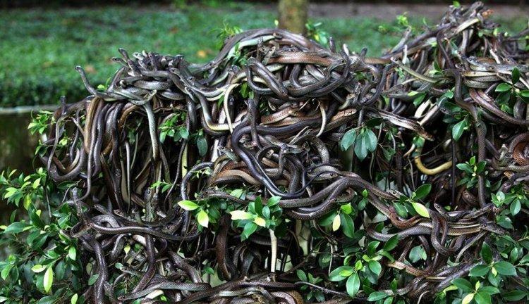 جزيرة الثعابين اخطر جزر العالم