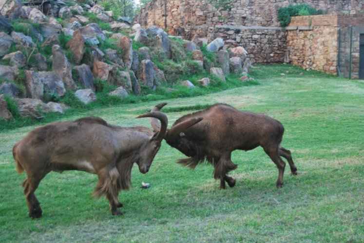 حديقة حيوان جوهانسبرج
