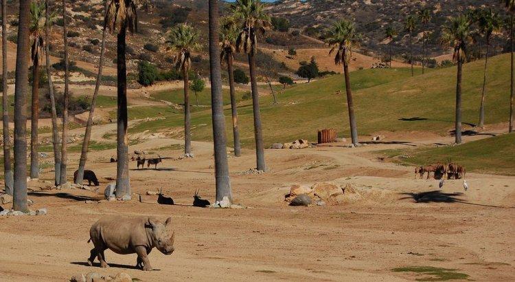 حديقة الحيوانات البرية في سان دييغو