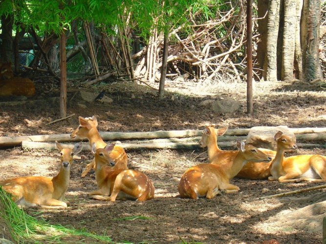 حديقة الحيوانات دوسيت Dusit Zoo في بانكوك