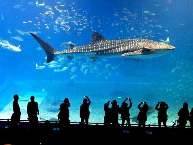 سي لايف بانكوك عالم المحيط Sea Life Bangkok Ocean World في بانكوك