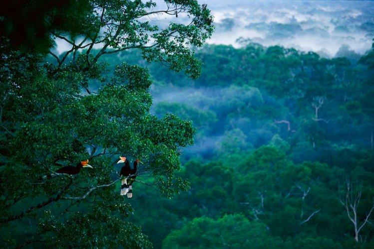 غابات صباح