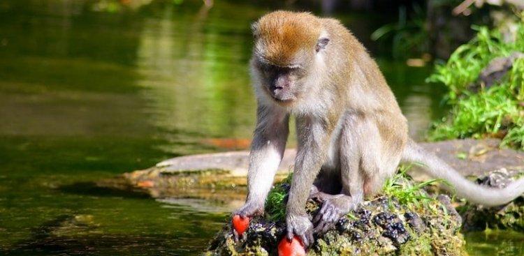 غابة القرود