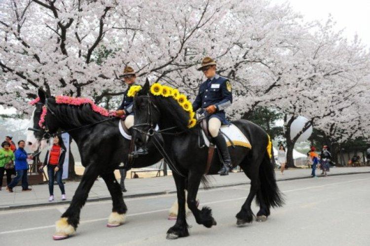 سباق الأحصنة