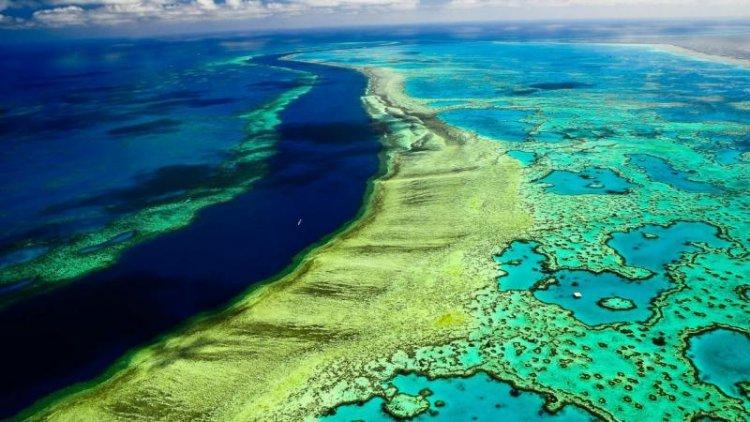 الساحل المرجاني