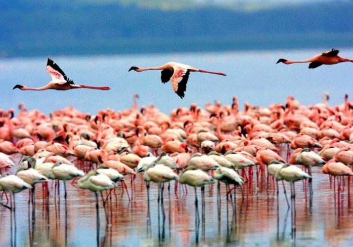 بحيرة منيارة في تنزانيا