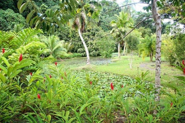 حدائق فايباهي