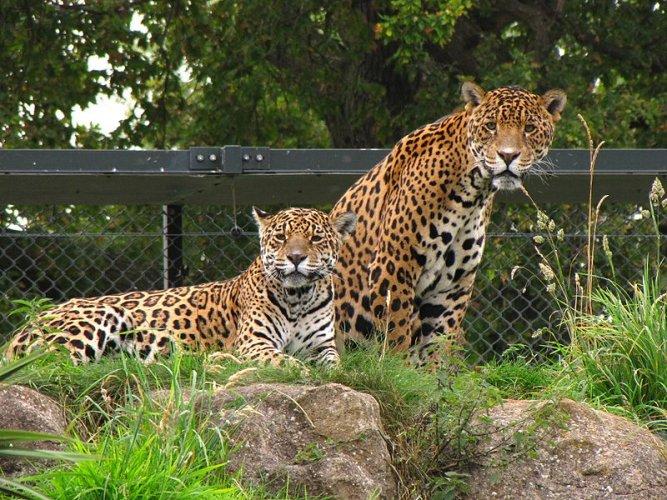 حديقة حيوانات شيستر