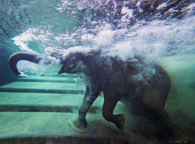 حديقة حيوانات لايبزيغ