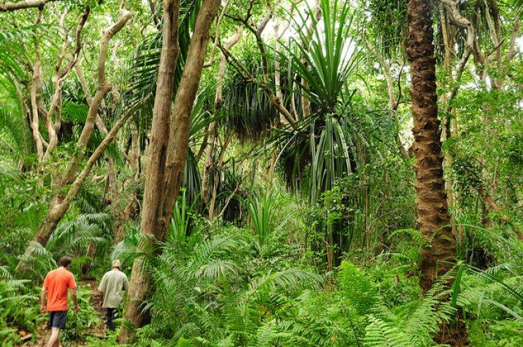 غابات جوزانى