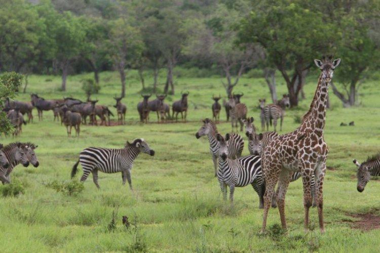 محمية سيلوس في تنزانيا