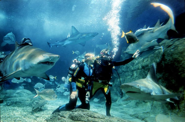 أكواريوم الحاجز المرجاني العظيم