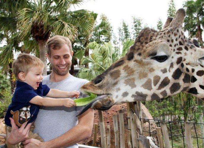 حديقة حيوانات تامبا في لوري بارك