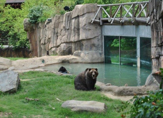 حديقة حيوان ممفيس في مدينة ممفيس الأمريكية