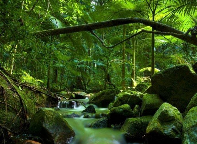 حديقة دينتري الوطنية وكيب تريبيوليشن