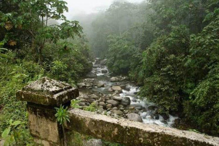 حديقة مانو الوطنيةفي بيرو