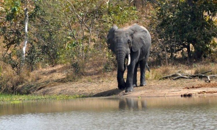 منتزه أرلي الوطني في بوركينا فاسو