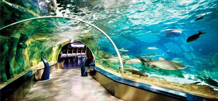 حوض اسماك اسطنبول
