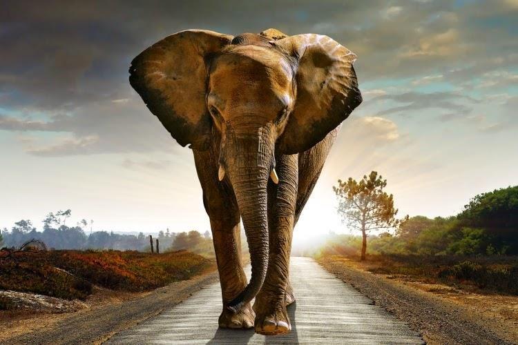 تربية فيل في المنزل