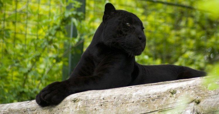 حديقة داريجا للحيوانات